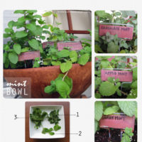 Garden Project: Plant a Mint Bowl | The Normal Girl Show